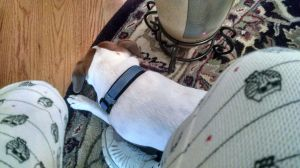 finn at my feet