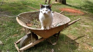 cat in a wheelbarrow